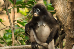 Mother macaque Royalty Free Stock Image