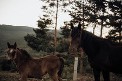 Mother mare and foal in the middle of a forest in the nature stock photo