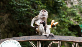 Mother Monkey with Baby Monkey Royalty Free Stock Photos