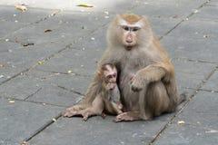Mother monkey and baby monkey sitting. On Flooring stock image