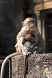 Mother monkey and child. Mother monkey holding tight her baby Royalty Free Stock Photography