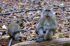 A mother monkey