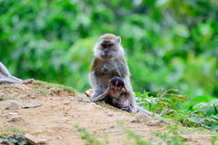 Mother monkey with her baby Stock Photo