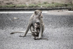 Mother monkey with her baby on the street in city with dark tone. Royalty Free Stock Image