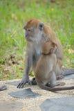 Mother monkey hugging Stock Photography
