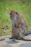 Mother monkey hugging Stock Photos