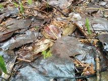 Mother nature Stock Photos