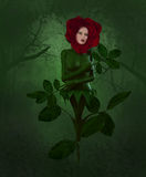 Mother Nature Cries. A wounderful Rose cries in the forest Stock Photo