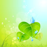 Mother nature - green leaves,mist and dew Royalty Free Stock Photo