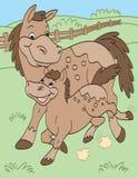 Mother och behandla som ett barn hästar Arkivfoton