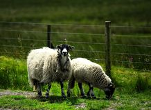 Mother and offspring. On the road verge Royalty Free Stock Photography