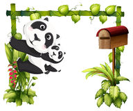 A mother panda together with her baby Royalty Free Stock Photos