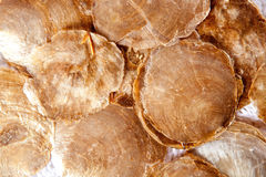 Mother of pearl brown round shells Stock Image