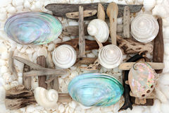 Mother of Pearl Seashell Abstract Stock Photo