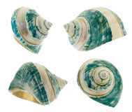 Mother-of-pearl shell Stock Photos