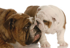 Mother and puppy love Royalty Free Stock Image