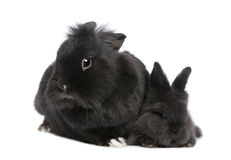 Mother Rabbit and his child Royalty Free Stock Photos