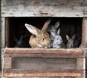 Mother rabbit with newborn bunnies Stock Photo