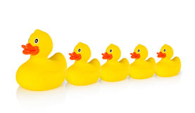 Mother rubber duck leading several rubber ducklings Royalty Free Stock Photos