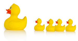 Mother rubber duck leading several rubber ducklings Stock Image