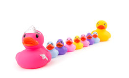 Mother rubberduck leading her children Stock Photo
