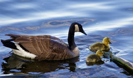 The mother's care Royalty Free Stock Photos