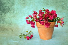 Mother's Day card: Flowers on grunge background Stock Photography