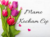 Mother`s day card with Polish words: Dzien Matki - Mother`s Day Stock Image