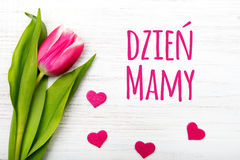 Mother`s day card with Polish words: Dzien Matki - Mother`s Day. Royalty Free Stock Photography