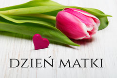 Mother`s day card with Polish words: Dzien Matki - Mother`s Day. Royalty Free Stock Images