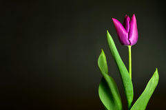 Mother's Day flower Royalty Free Stock Image