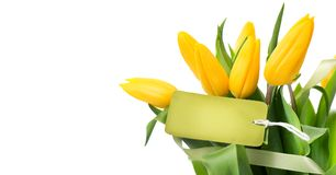 Mother`s Day holiday spring yellow tulips flower bunch with blank greeting card. Beautiful tulip flowers bouquet royalty free stock photography