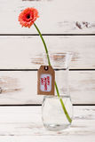 Mother`s day label and gerbera. Stock Photos