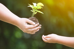 Mother`s hand giving young tree to a child for planting together Royalty Free Stock Photography