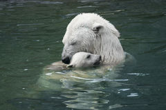 Mother's love. Polar bear with cub Royalty Free Stock Photo
