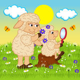 Mother sheep adorns head daughter Stock Photo