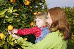 Mother showing daughter orange tree harvest Stock Image