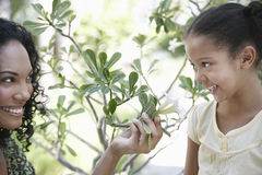 Mother Showing Flower Plant To Daughter Stock Photo