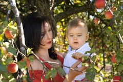 Mother with a son in an apple orchard Royalty Free Stock Images