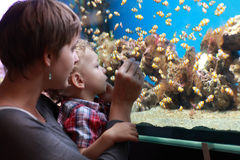 Mother and son at aquarium Royalty Free Stock Images