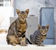 Mother and son of a cat family. Hong Kong Royalty Free Stock Images