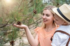 Mother and son collecting cones in the forest.Family leisure. stock image