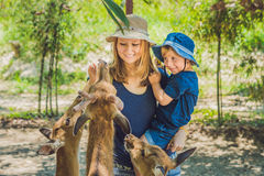 Mother and son feeding beautiful deer from hands in a tropical Zoo Royalty Free Stock Photography