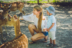 Mother and son feeding beautiful deer from hands in a tropical Zoo.  Royalty Free Stock Image
