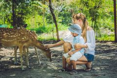Mother and son feeding beautiful deer from hands in a tropical Zoo.  Stock Photo