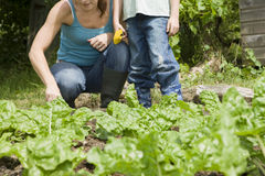 Mother And Son Gardening Royalty Free Stock Image