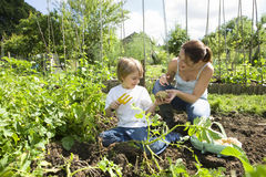 Mother And Son Gardening Royalty Free Stock Photography