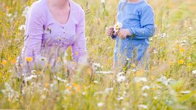 Children picking flowers on a meadow royalty free stock photos