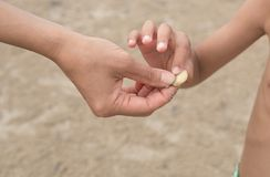 Mother and son hand holding sea shells royalty free stock image