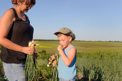 Mother and Son Harvesting Green Onions at the Farm Stock Images